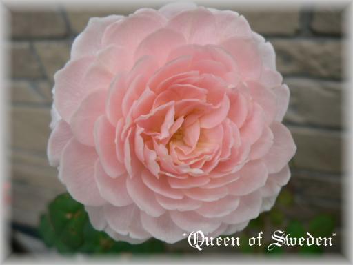Queen of Sweden10.7.3.jpg