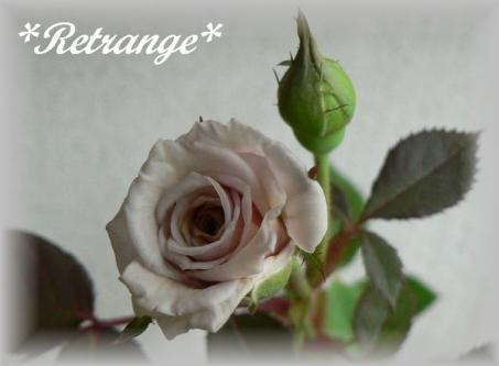 Retrange7.7.3.jpg
