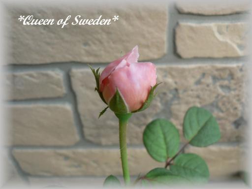 Queen of Sweden6.16.jpg