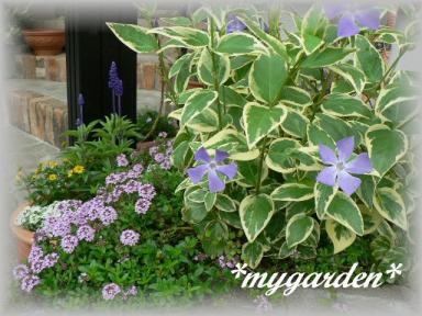 mygarden5.13.jpg