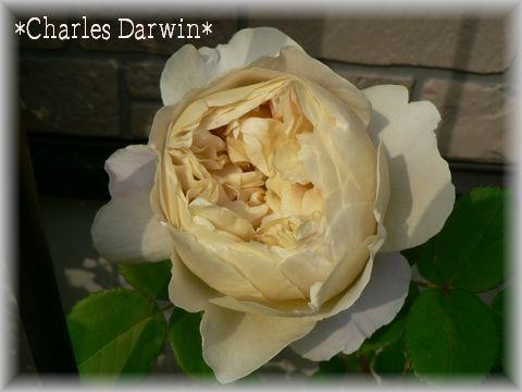 Charles Darwin2009.5.12-1.jpg