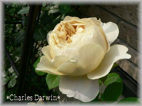 Charles Darwin2009.5.12-2.jpg