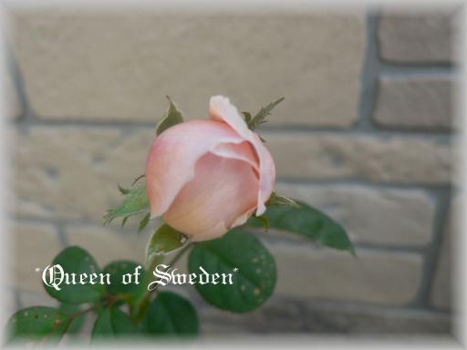 Queen of Sweden10.5.jpg