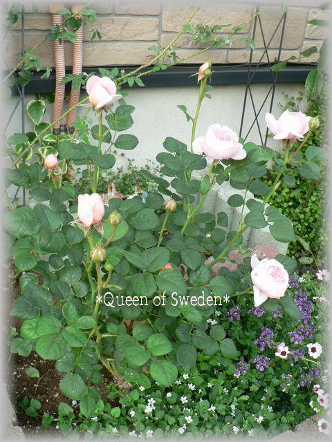 Queen of Sweden2009.5.9-3.jpg