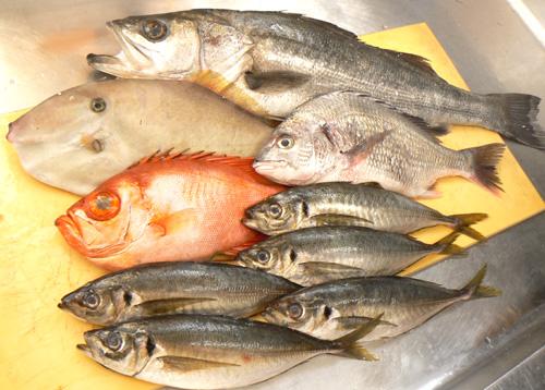 唐津鮮魚.jpg
