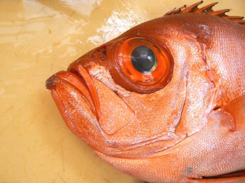 キントキ鯛.jpg