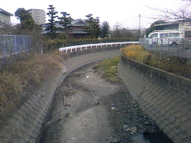 サギ110129A