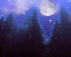 静の森 2