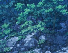 夜の森と樹木