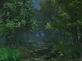 夜の森の道
