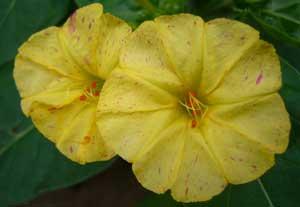 黄色い花~★