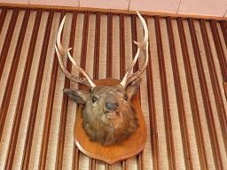 おじか(牡鹿)んがきました。しか(鹿)たがないから帰ります。
