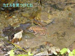 カエルを見つけてね