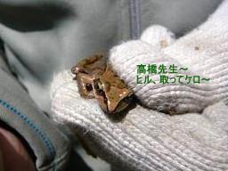カエルの願い