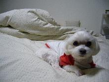 2006_0119画像0005.JPG