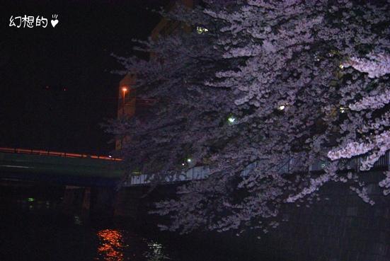 20100408 夜桜.jpg