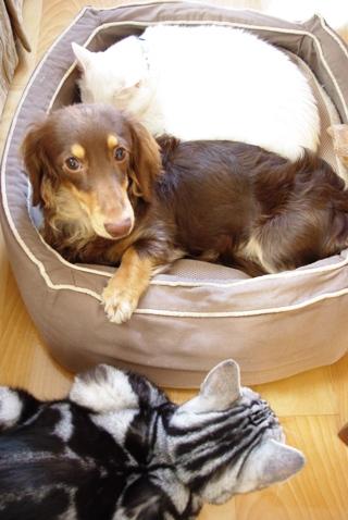 20100202 太郎のベッドだし.jpg
