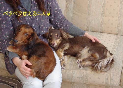 20100216 甘えんぼ.jpg