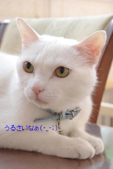 20100703 クー.jpg