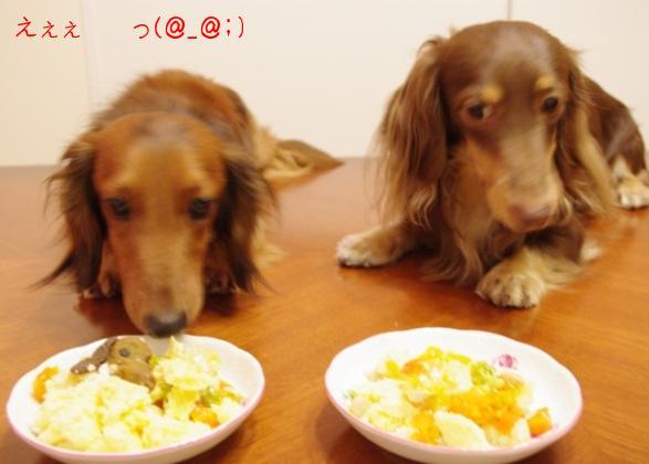20110731 タロ兄ちゃんがっ!.jpg