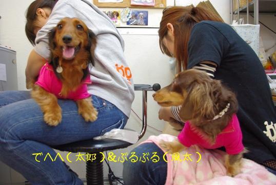 20091213 兄ちゃん なじぇ笑う?.jpg