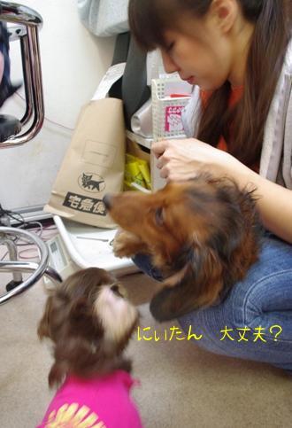 20091213 心配する風太.jpg