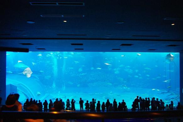 20110424 大きい水槽.jpg