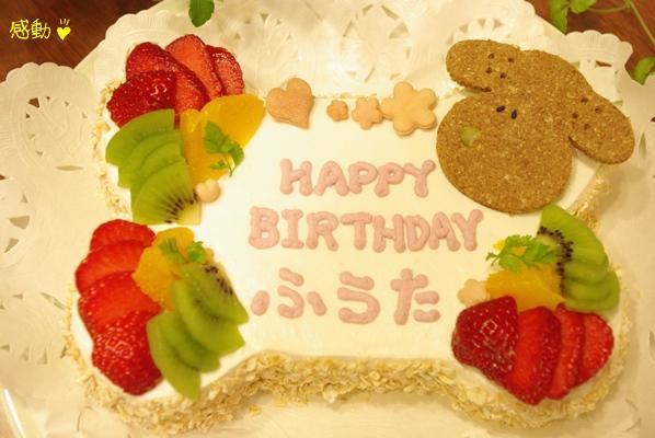 20100425 風太のケーキ.jpg