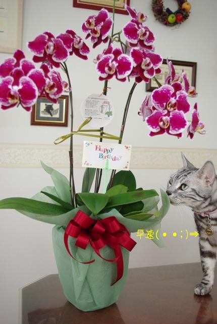 20100810 ちょびが・・・.jpg