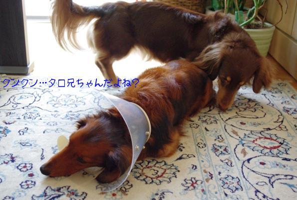 20100525 くんくん.jpg