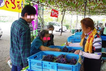 20101011 ぶどう選び.jpg