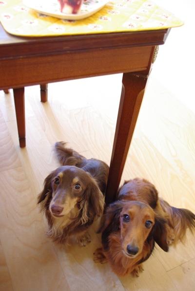 20100615 テーブル下で待機中.jpg