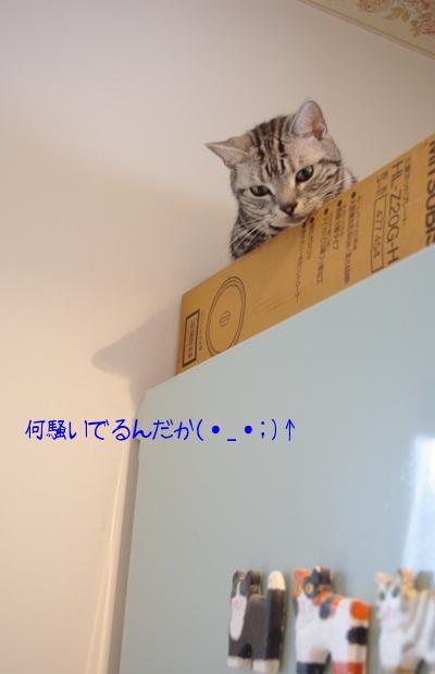 20100703 ちょび.jpg