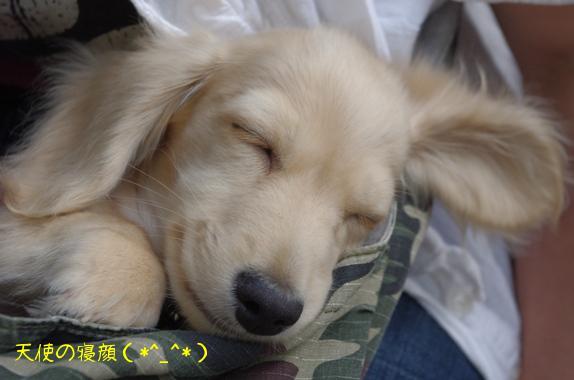20100509 おーじろ君 ねんね.jpg
