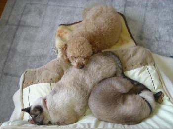 3匹でお昼寝。
