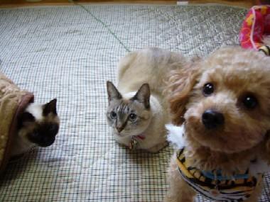 猫たちとマル。