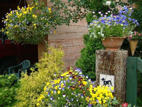 English Rose Garden Muto