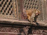 猿。こんなんが、いっぱい居る!