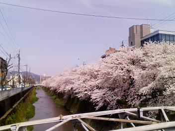 0405sakura.JPG