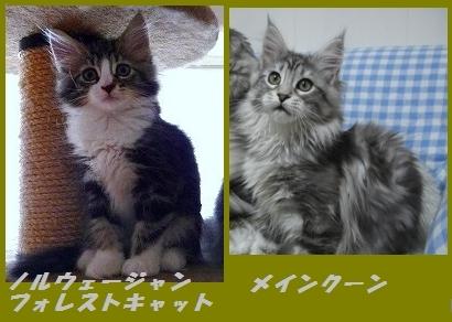 猫_2.jpg