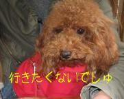 IMG_0223_320.jpg