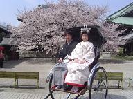婚礼道中(東長寺の桜前で)
