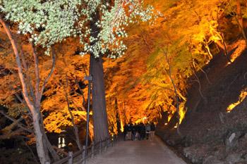 紅葉のトンネル.jpg