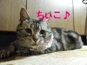 2010_0411うさちゃん0180.JPG