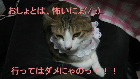 2011_0902うさちゃん0990.JPG