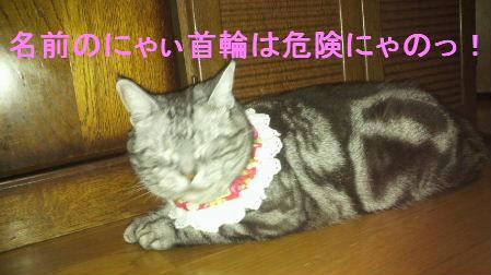 2011_0902うさちゃん0998.JPG