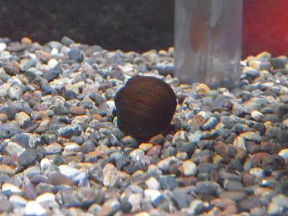 石巻貝さん