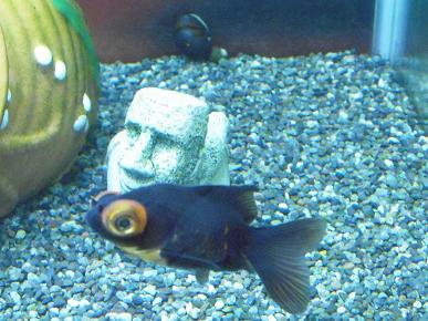 モアイ像と謎の金魚さん