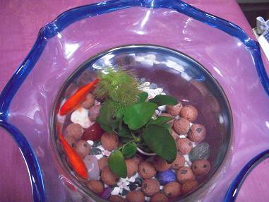 金魚鉢の和金魚さん