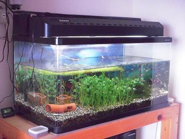 水草ボーボー熱帯魚水槽
